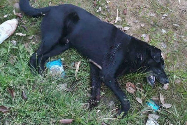 Un perro fue muerto de seis balazos porque se le metía en la casa