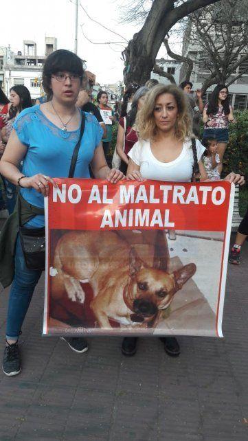 Piden aclarar el ataque a una perra a la que le sacaron los ojos y la apuñalaron