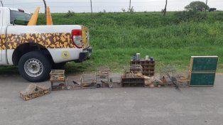 Decomisaron más de medio centenar de aves silvestres en dos procedimientos
