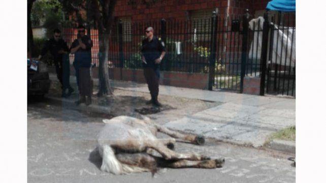 Un caballo se desplomó agonizando por llevar un carro cargado