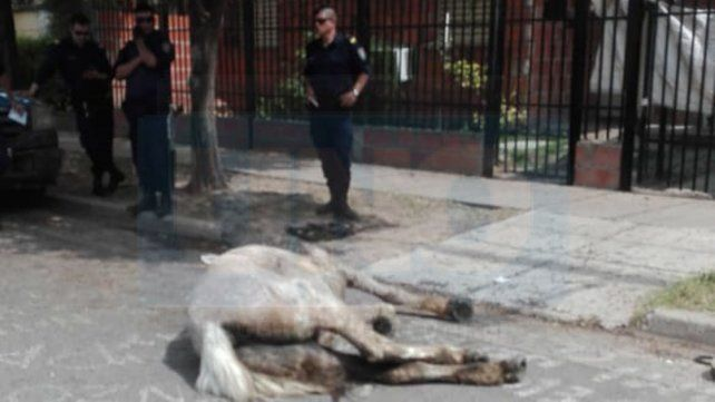 No resistió: murió el caballo que se desplomó traccionando un carro