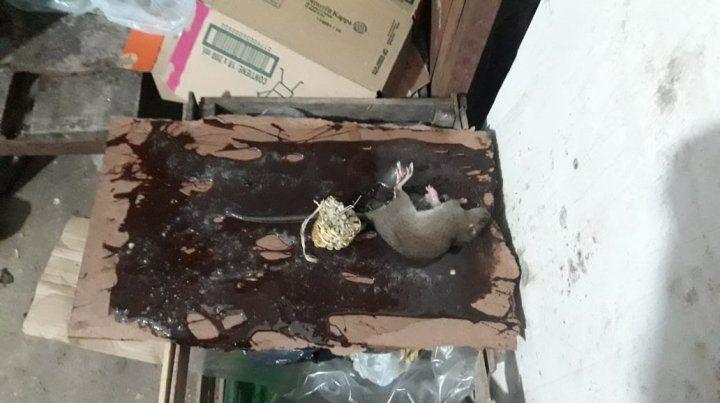 Un ratón entre la comida.