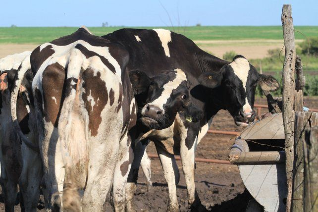 Los huérfanos de Cotagú y de Cotapa llorando sobre la leche derramada
