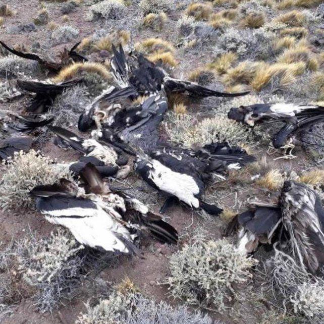 Los casos de muerte masiva fueron presentados ante la Fiscalía de Estado, el Consejo Federal de Medio Ambiente, la Secretaría de Ambiente Nación y autoridades de fauna provincial