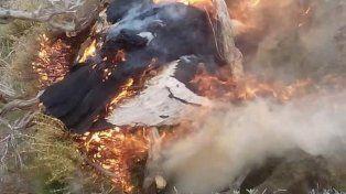 Otros 23 cóndores aparecieron muertos por envenenamiento en la Patagonia