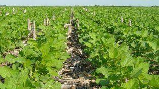 Continúan con la siembra de soja en Entre Ríos en más de 1,2 millones de hectáreas