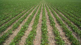 La siembra de soja de primera correspondiente a la campaña 2018/19 en Entre Ríos superó el millón de hectáreas.