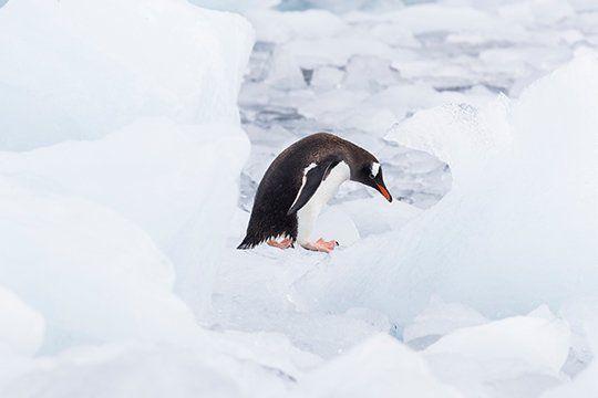 Según Greenpeace, apuestan a la expansión de la pesca y no a la conservación.