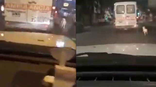 Persiguió la ambulancia que trasladaba a su dueño hasta el hospital