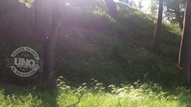 Pastizales en el Parque