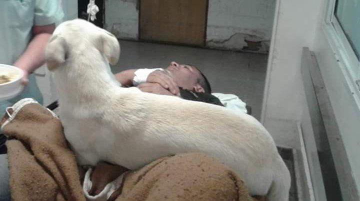 VIDEO: El perrito que siguió la ambulancia sigue cuidando a su dueño