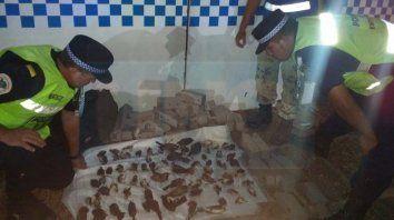trasladaban gran cantidad de aves en la baulera de un colectivo: 85 pajaros ya estaban muertos