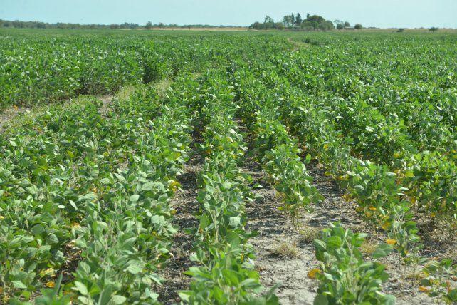 Realidades. Las principales variaciones de los costos están ligadas al arriendo de las superficies agrícolas.