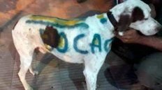 pinto con aerosol su perro para la #superfinal y fue escrachado por proteccionista