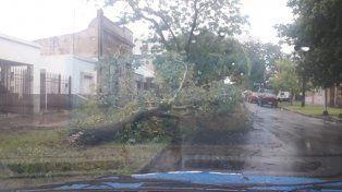 Por el temporal calles y casas anegadas, árboles caídos y familias afectadas