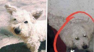 Olaf se perdió en el barrio Las Acacias de Paraná: dos familias lo extrañan
