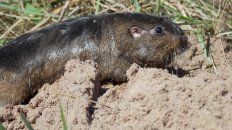 especie en peligro fue registrada en el parque nacional pre delta