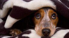 cinco consejos para cuidar a tu mascota de la pirotecnia en las fiestas