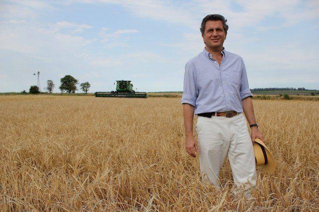 El Gobierno sobrestimó la cosecha de trigo y no será récord