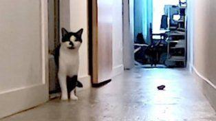 Quería saber qué hacía su gato cuando estaba solo en la casa, lo grabó y el video se hizo viral