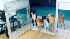 la historia de los cuatro perritos que esperan en la puerta de un hospital