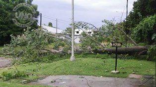 En calle Balbín cayó un árbol de gran porte