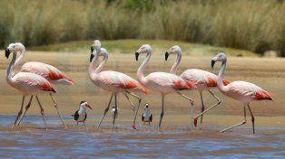 Flamencos en el río Uruguay
