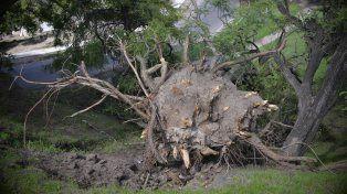 Las raíces.