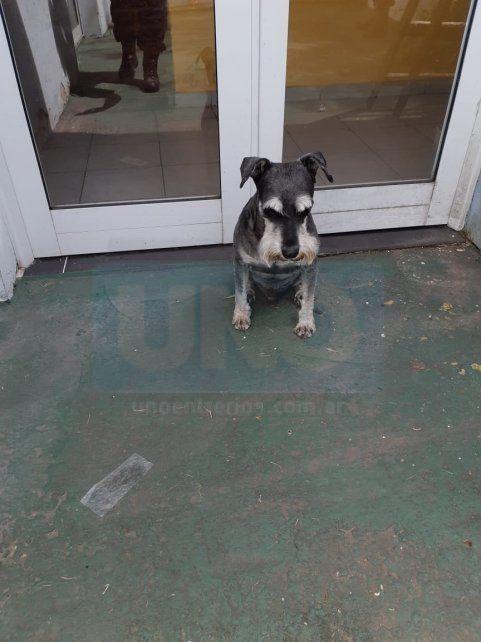 Esperando al dueño. El perrito triste estaba en la comisaría 14°