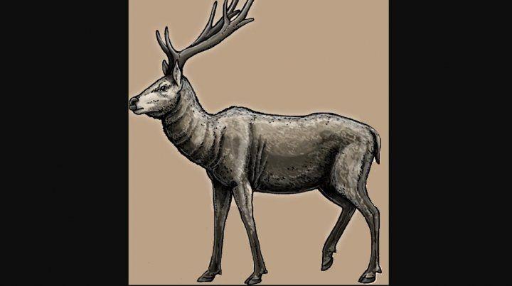 Descubren un fósil de ciervo prehistórico muy bien preservado
