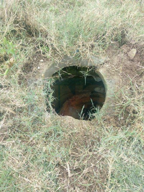 Un potrillo cayó en un pozo y se debió hacer un gran operativo para salvarlo