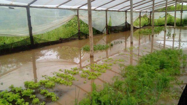 El agua tapó la producción en el invernadero.
