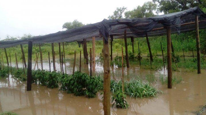 Porque el gobierno se comprometió a impulsar la agroecología en la provincia.