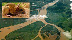 un trabajador rural del departamento gualeguay fallecio por hantavirus