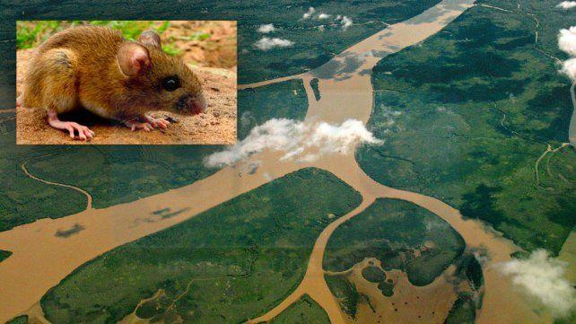 Un trabajador rural del departamento Gualeguay falleció por hantavirus
