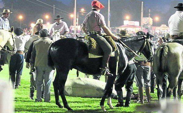 Otra toma del caballo tirado en el campo de doma.