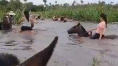 Baquianas. Las muchachas en pelo ayudan a llevar el ganado entre la creciente. Foto: 7 Corrientes