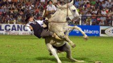 proteccionistas locales repudiaron la muerte de un caballo en jesus maria y denunciaron vacio legal