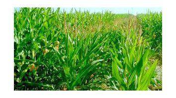 El Niño 2019 en la agricultura