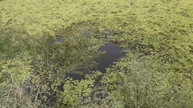 Auto se despistó y cayó a un arroyo, y los ocupantes tuvieron muchas suerte