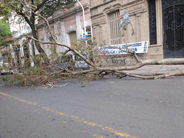 Previo a la tormenta, se cayó un árbol a metros de LT 14