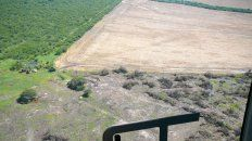en los ultimos 10 anos, entre rios perdio unas 135.000 hectareas por deforestacion