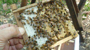 Actividad destacada. Argentina es el tercer productor de miel en el mundo.
