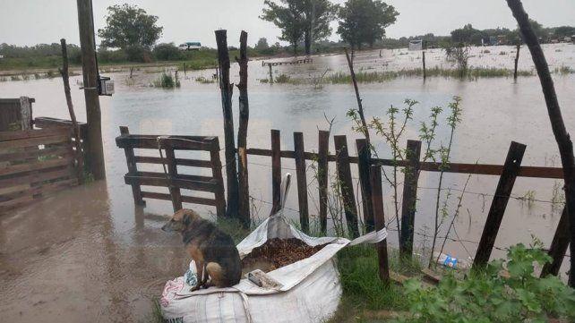 Barrios de Gualeguay están gravemente afectados por las intensas lluvias
