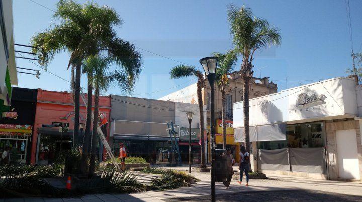 Retiran las palmeras de calle Venezuela