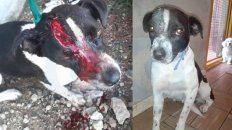 Un antes y un después. Julia logró salvar la vida tras la asistencia veterinaria.