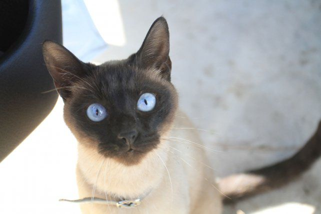 Día del Gato: Los felinos en las lentes de UNO