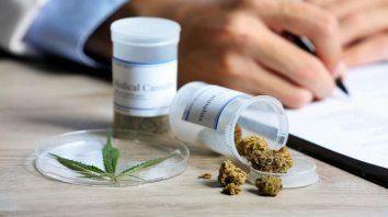 Con las flores del cannabis se produce el aceite medicinal.