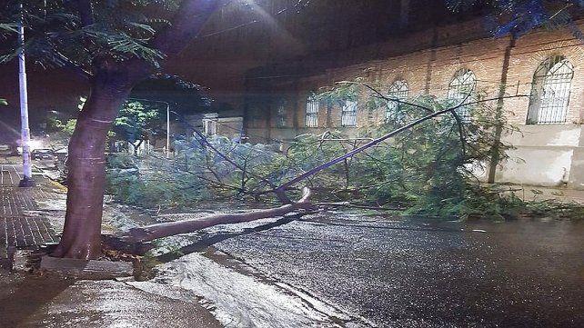 Una rama arrastró el cableado en calle Paraguay.
