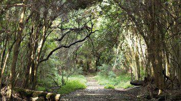 Espinal. El área abarca zonas ribereñas y de la selva de Montiel, con una variedad de especies.
